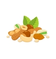 Sorts of nuts composition vector image