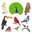 Bird Drawn Icon Set vector image