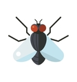 Bluebottle fly insect species calliphora vomitoria vector image