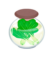 A Jar of Delicious Pickled Baby Pakchoi vector image vector image