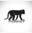monkey on white background wild animal vector image