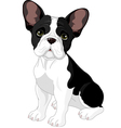 french bulldog vector image