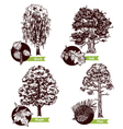 Sketch Tree Leaves Design Concept vector image