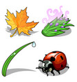 ladybug and plants on a white background vector image