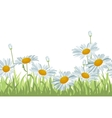 Seamless background with white daisies vector image