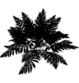 fern graphic vector image vector image
