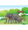 Elephants with a wooden signage at the back vector image