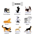Dogs Breed Colored Icon Set vector image