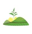 Nature tea plant field vector image