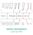 Dental infographic vector image