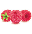 group of fresh raspberry isolated on white vector image