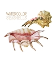 Watercolor seashells collection vector image