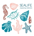 Sea collection with seashells starfish vector image