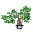 bonsai tree in a pot vector image