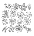 Graphic succulent collection vector image
