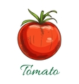 Tomato fruit vegetable icon vector image vector image