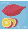 Sweet potato icon vector image