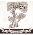Fable forest hand drawn by a vintage font - F vector image