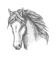 Purebred horse head sketch for equine sport design vector image