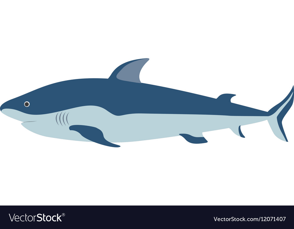 Colorful silhouette with sea shark vector
