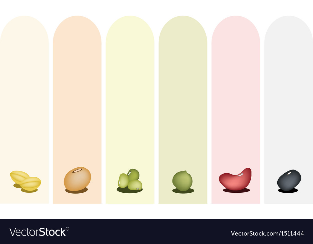 Different beans banner vector