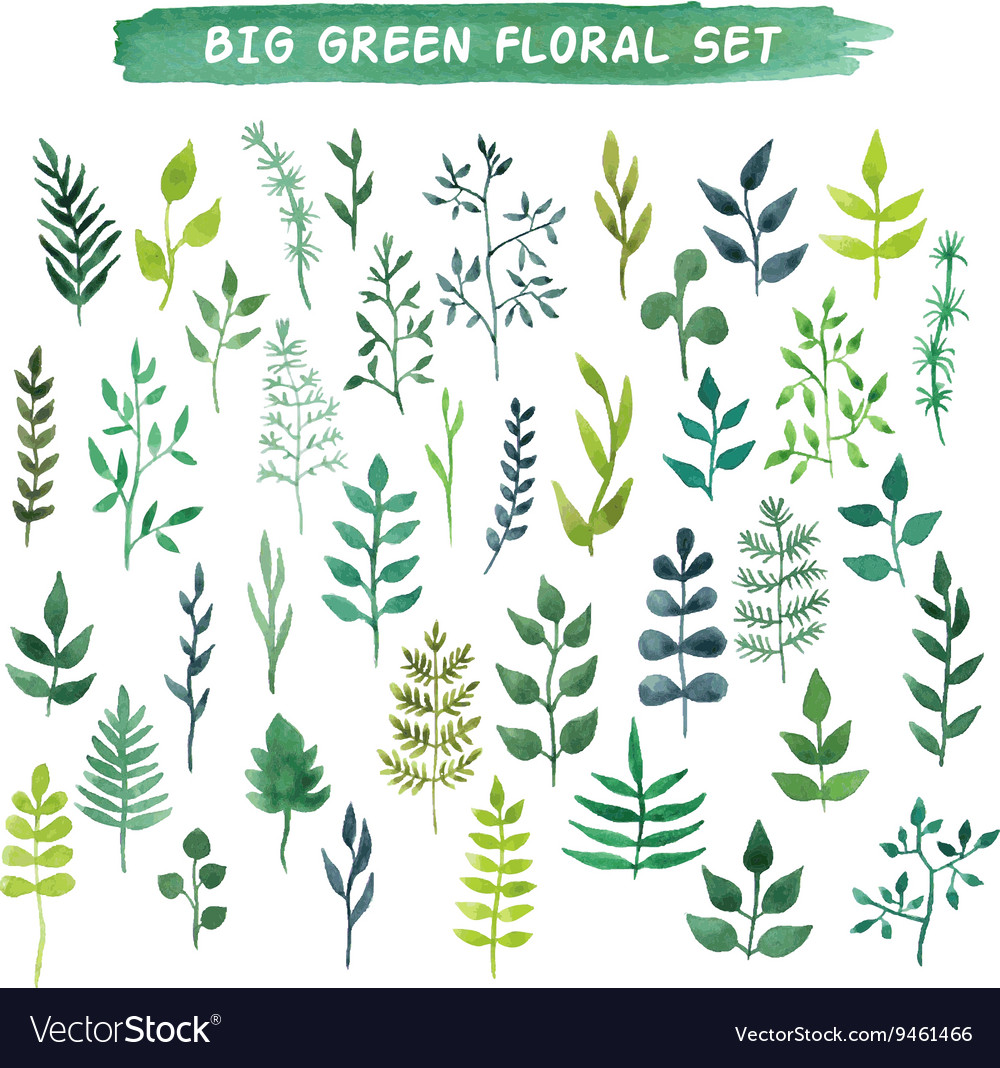 Watercolor floral set big green floral vector