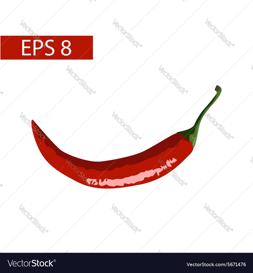 Hot red peppers vector