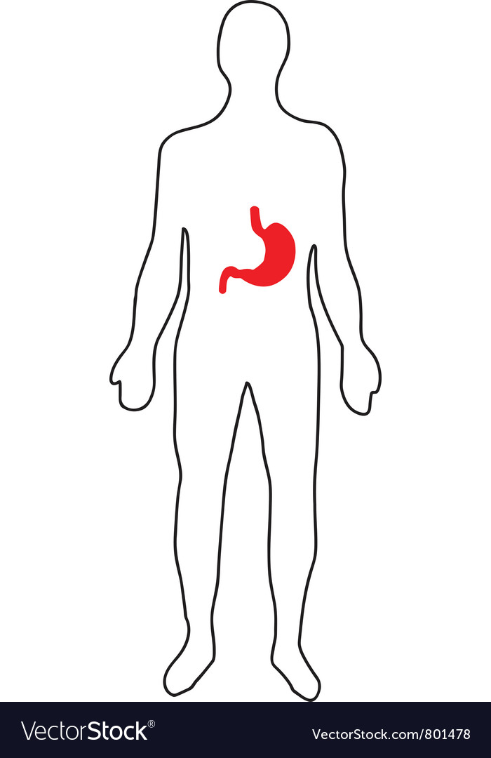 Schematic representation of the human gastric vector