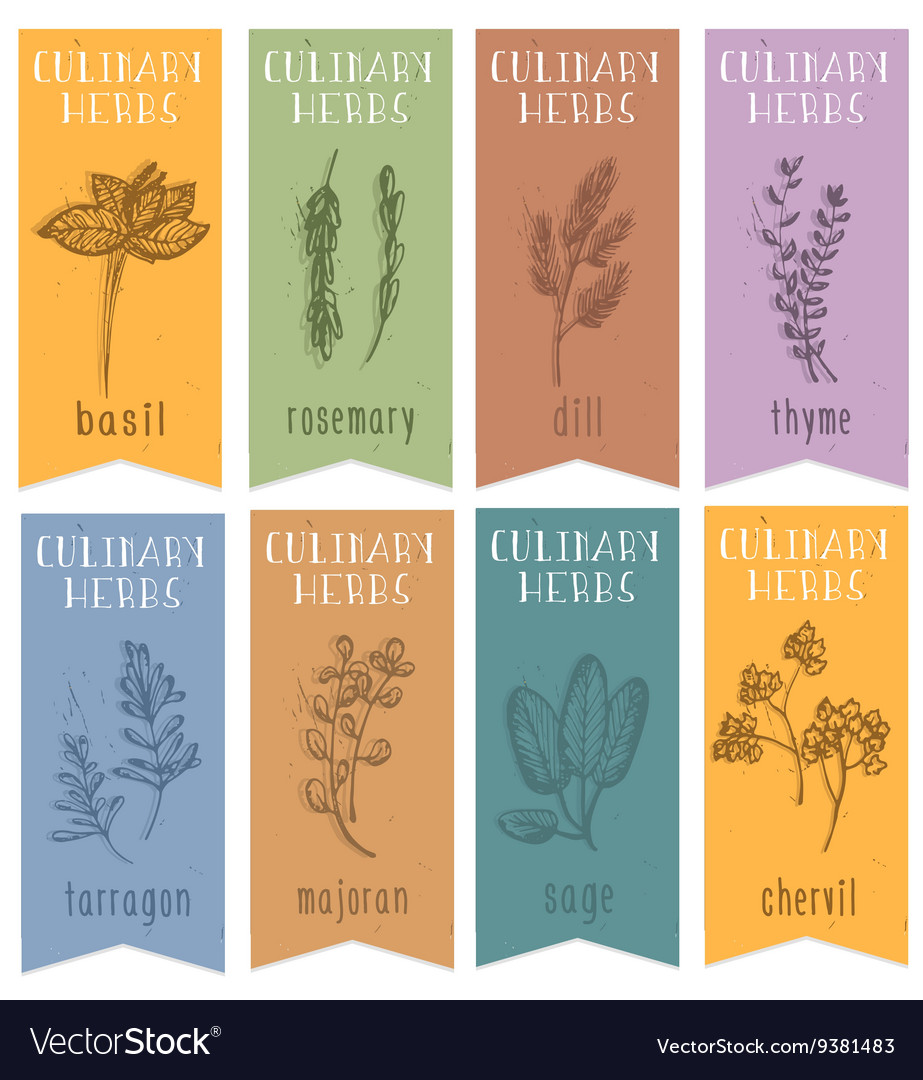 Set of 8 herbal labels on hand drawn sketch vector