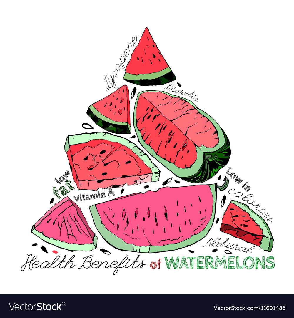 Watermelon benefits 02 a vector