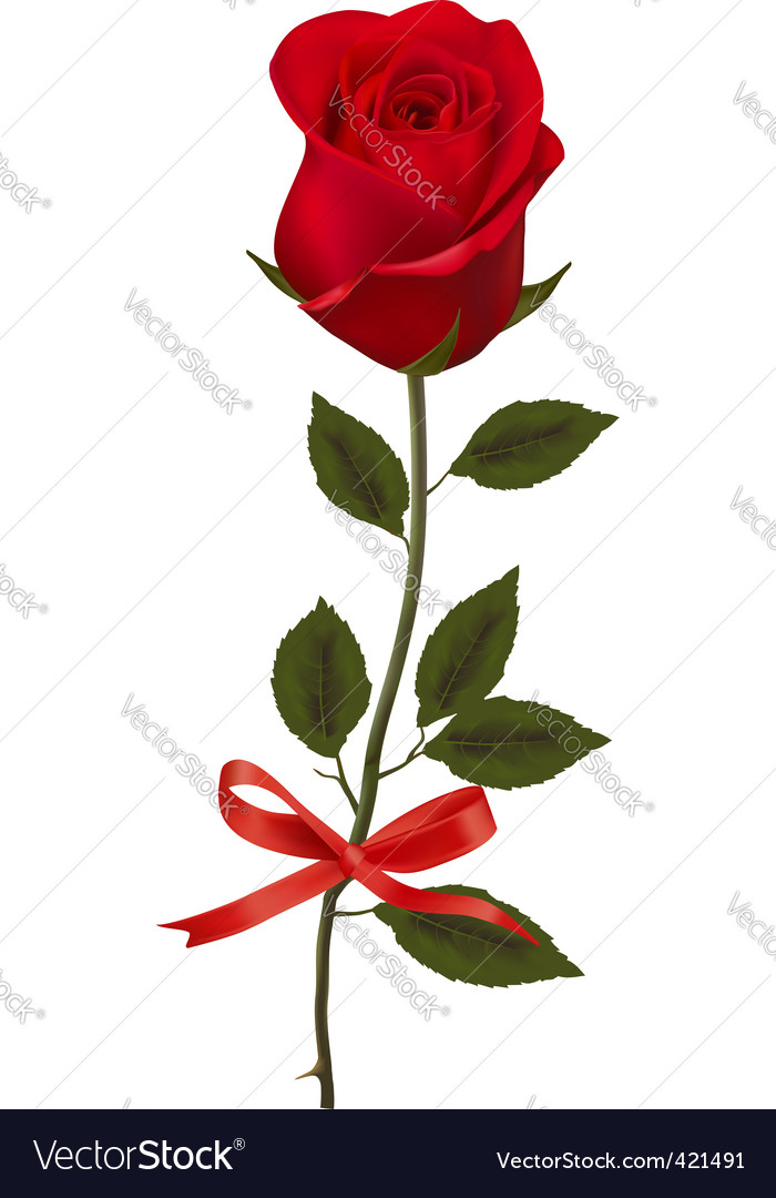 Beauty red rose with bow vector