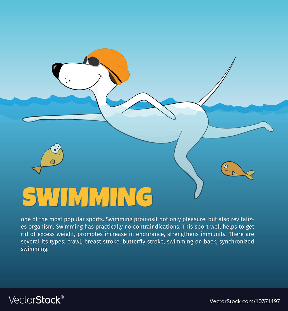 Dog swimming in the water vector