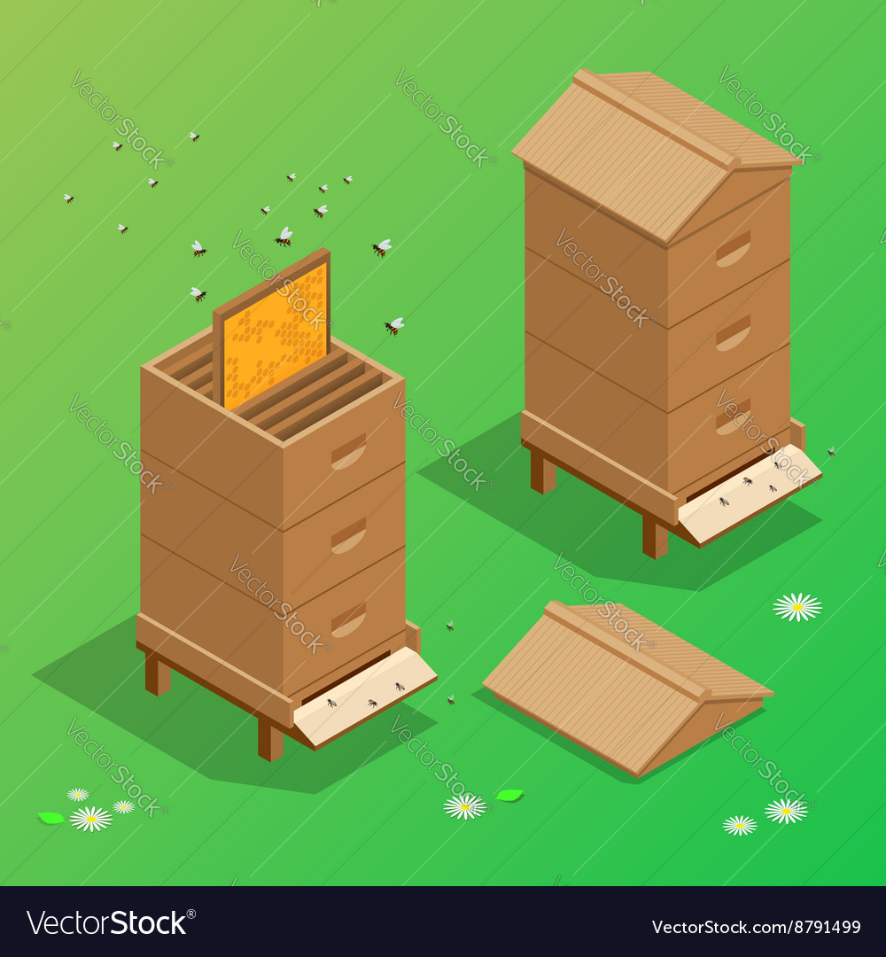 Apiary honey bee house apiary vector