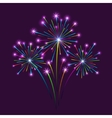 Firework on Dark Background vector image