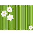 flowers daffodils vector image vector image