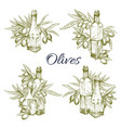 olive oil and olives sketch icons set vector image