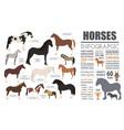Horse breeding infographic template farm animal vector image