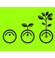 germinate seeds vector image vector image