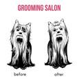 beauty dog salon template vector image