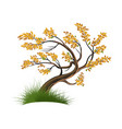 tree on a white vector image vector image