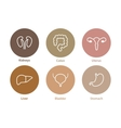 human internal organs icons Liver kidneys vector image