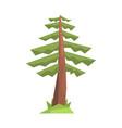fir tree colorful cartoon vector image