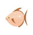 sea fish isolated icon vector image