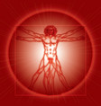The Vitruvian Man vector image