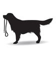 dog walking vector image vector image