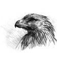 sketch of eagle vector image