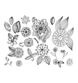 Set of doodle floral elements for design or vector image vector image