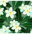 seamless pattern with frangipani plumeria flowers vector image
