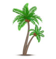Tropical palm tree with coconuts vector image