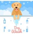 Dog wash vector image